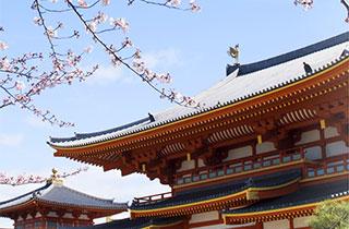 金剛寺 モバイル 念法眞教の歴史